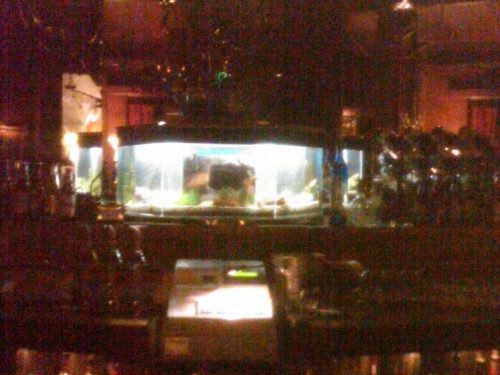 The resident fishtank at Bimbo's is behind the cash register in the cocktail lounge, providing a point of reference to show how small the tank is. (© 2011, Steven P. Marsh)